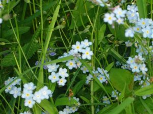 Flora vår å (Small)