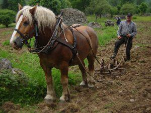Häst och harv 062